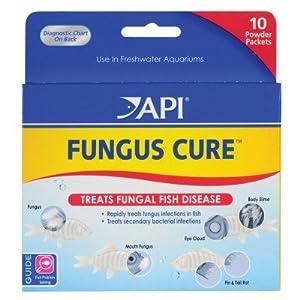 Help cory ich or fungus my aquarium club for Betta fish fungal infection