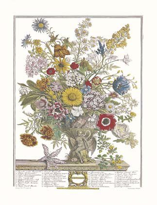 Twelve Months of Flowers, 1730/November, Art Poster by Robert Furber