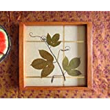 Aamori Grape Vine Serving Tray