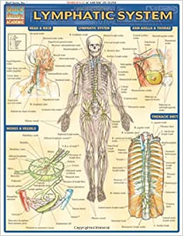 Lymphatic       System     Medical Series   Inc BarCharts  9781572227071  Amazon  Books