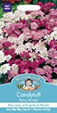 Mr. Fothergill's 11888 500 Count Candytuft Fairy Mixed Seed