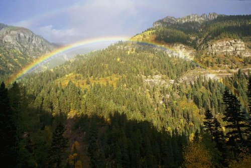 A Rainbow Arches Above A Forest Of Evergreens In The San Juan Mountains Near Ou Ray Wall Mural - 24 Inches W X 16 Inches H - Peel And Stick Removable Graphic