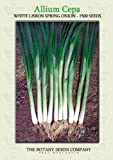 White Lisbon Bunching Spring Onion (1500) Seeds - Scallion - Allium Cepa