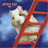 Guinea Pigs 2008 Square Wall Calendar (Multilingual Edition)
