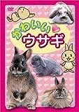 かわいい ウサギ