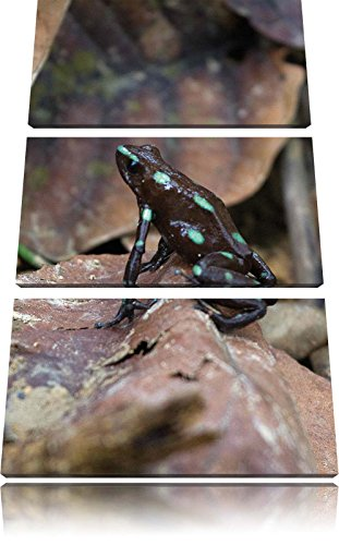 piccolo nero Poison Dart Frog Immagine 3 pezzi picture tela 120x80 su tela, XXL enormi immagini completamente Pagina con la barella, stampe d'arte sul murale cornice gänstiger come la pittura o un dipinto ad olio, non un manifesto o un baner