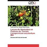Larvas de Noctuidos En Cultivos de Tomate Lycopersicon Esculentum Mill: Gusanos del fruto del tomate