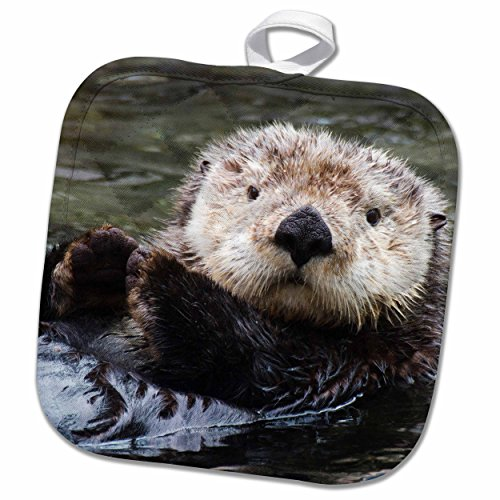 3dRose VWPics Animals - Sea Otter (closeup).(Enhydra lutris). - 8x8 Potholder (phl_45622_1)