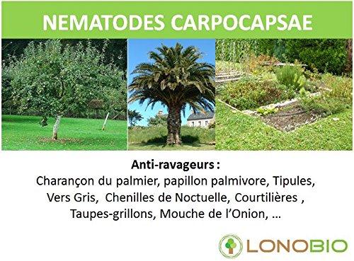 nematodes-carpocapsae-anti-ravageurs-contre-les-charancon-vers-gris-chenille-de-noctuelles-courtilli