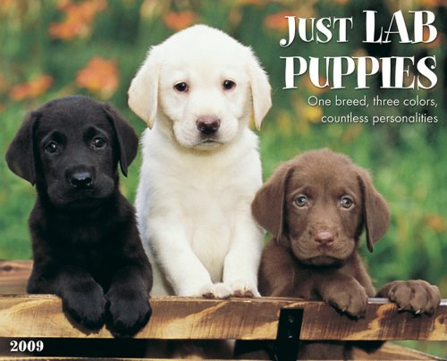 Just Lab Puppies 2009 Calendar (Just)