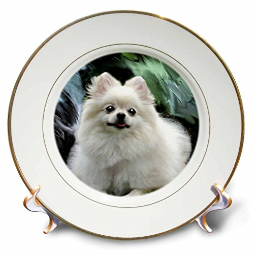 3dRose cp_4167_1 Pomeranian Porcelain Plate, 8-Inch