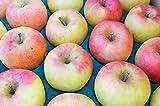 長野県産 生産農家直送りんご 「名月」 中級ランク ご贈答&自家用向き 10~18玉 約5kg入り/箱