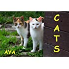 Children's Book: Cats (Amazing Pictures Of Animals For Kids)(Beginner Readers eBook Series for age 2-6)
