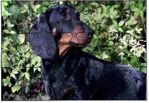 Dachshund (Black Lh) Dog 15 Piece Jigsaw Puzzle 84
