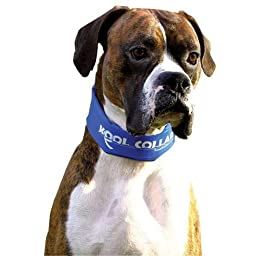 Kool Collar Electric Blue, Sizes: Large 24in30.5in