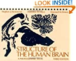 Structure of the Human Brain: A Photo...