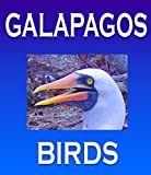 img - for Galapagos Islands Birds in Herman Melville's