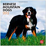 Bernese Mountain Dogs 2013 Square 12X12 Wall