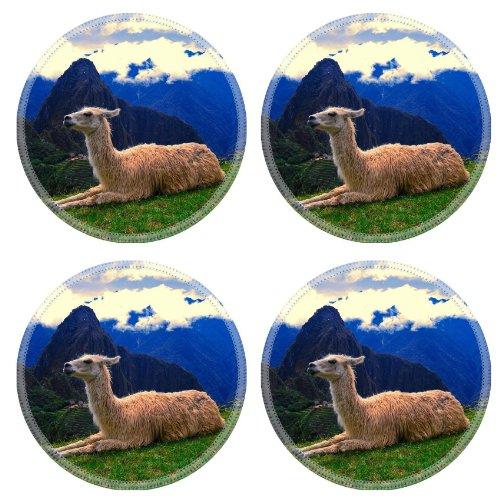 Camel Drink Bottle front-695708