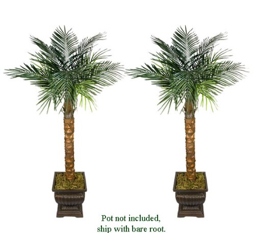 TWO 6' Artificial Phoenix Coconut Palm Trees BENDABLE with REAL Coconut Bark Wrapped Trunks