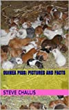 Guinea Pigs; Pictures and Facts