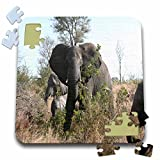 Angelique Cajam Safari Elephants - South African Elephants eating leaves - 10x10 Inch Puzzle (pzl_20103_2)