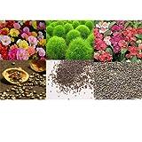 alkarty portulaca kochia and balsam seed