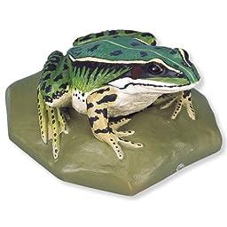 3B Scientific VN704/2 Female Edible Frog (Rana Esculenta)