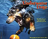 Underwater Dogs 2013 Wall Calendar