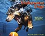 Underwater Dogs 2013