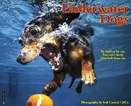 Underwater Dogs 2013 Wall Calendar