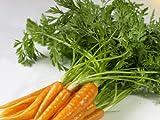 野菜ジュースに最適 旬の野菜ジュースの材料 人参