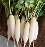 Radish White Icicle D28106A (White) 500 Organic Heirloom Seeds by David's Garden Seeds