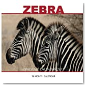 Zebra Mini Wall Calendar 2017: 16 Month Calendar