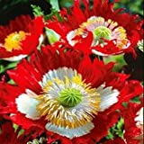 Outsidepride Poppy Danish Flag - 5000 Seeds