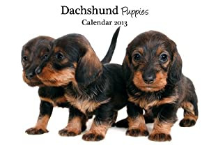 Magnet & Steel Dachshund Puppies A4 Wall Calendar