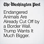 Endangered Animals Are Already Cut Off by a Border Wall. Trump Wants It Much Bigger. | Darryl Fears