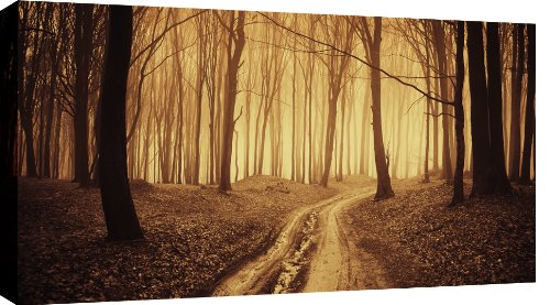 CANVAS ART PICTURE GOLDEN FOREST MOUNTED READY TO HANG 34 X 20 INCHES