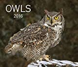 img - for Owls 2016 book / textbook / text book