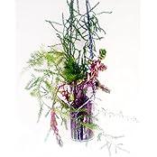 KRYSTAL KRAFT Hand Made Hanging Glass Planter (Transparent, 18 Cm X 9 Cm X 18 Cm)