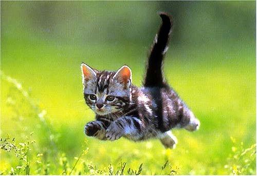 [猫動画]飛び立つハトをジャンプして捕まえるネコがすごいwwwwwwww - ねこガンプ!