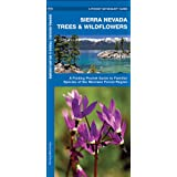 Sierra Nevada Trees & Wildflowers: A Folding Pocket Guide to Familiar Species of the Montane Forest Region (Pocket Naturalist Guide Series)