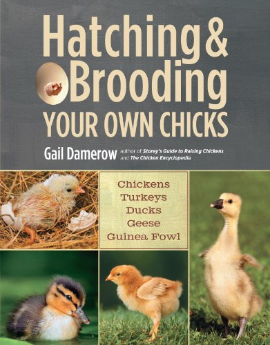 Download Hatching & Brooding Your Own Chicks: Chickens, Turkeys, Ducks, Geese, Guinea Fowl