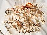 A品天然ヒトデ4Pとホタテ2P/白いサンゴ/ 色々な貝殻セット BIGパック インテリア手作り素材に