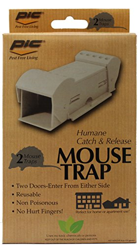 how to catch mouse at home
