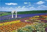 300ピース 花の咲く丘-富良野 25-081S