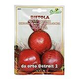 野菜の種 ビートルート(ビーツ)・デトロイト2