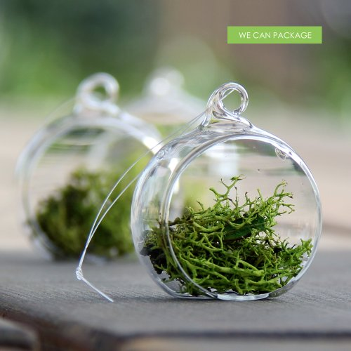 We Can Package 2 Inch Hanging Globe Glass Orb Terrarium Container Wedding Centerpieces Ideas 12pc/pack