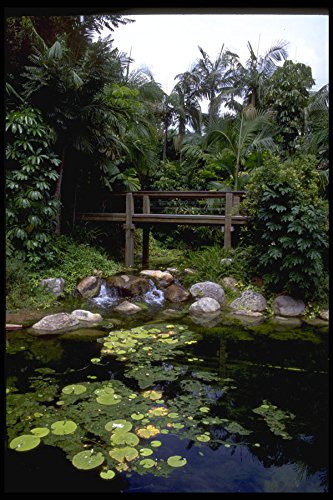 411052-rain-forest-walk-south-bank-brisbane-queensland-a4-photo-poster-print-10x8