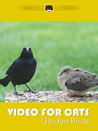 Video For Cats Garden Birds